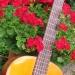 guitare pythagore